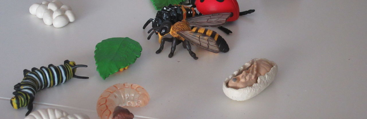 The picture shows tactile models of insects. Models of this kind give blind and visually impaired people an impression of the shape.